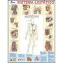 Mapa Sistema Linfático Do Corpo Humano - 120 X90cm
