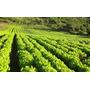 Substrato Adubo Orgânico Especial Horta - Alface
