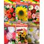 Kit 6 Pacotes Sementes Flores Ficóide Girassol Aster Cravina