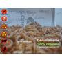 500 Larvas De Tenebrio Molitor - Top Qualidade
