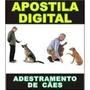 Como Ensinar Cachorro Apostila Digital Mais Barato Treino
