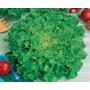 Semente De Alface Mimosa Salad Bowl Peletizada 10.000mx