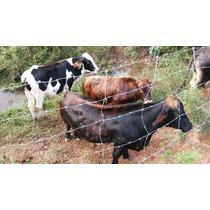 Mini-vaca Leiteira / Mini-gado