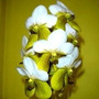 C Orquídea Vanda Two Tone Parisien Adulta