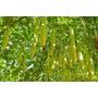 Abóbora-d Água Gigante Sementes Para Plantar + Frete Gratis