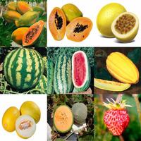 Kit 9 Tipos De Sementes Frutíferas Fruteiras Melão Mamão Etc