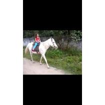 Cavalo Branco Domado