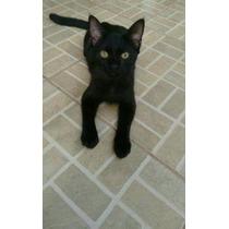Gato Macho Abandonado Para Adoção Responsável