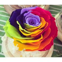 20 Sementes Da Rosa Arco Iris Rainbow Exótica E Rara
