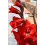 Bulbos De 04 Gladíolos Vermelhos Palma Sta Rita Veja O Frete