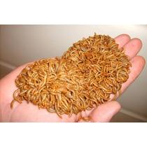 Tenébrio Molitor - Balde 600 Larvas - Alimento Vivo