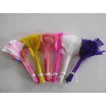 Penas Coloridas
