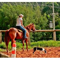 Cavalo Três Tambores E Laço