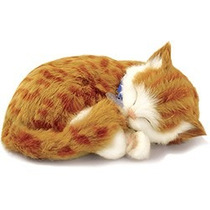 Gato Orange Tabby Perfect Petzzz Filhote De Pelúcia 15cm