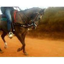 Cavalo Quarto De Milha-potra Muito E Inteligente Vaquejada D