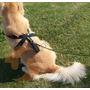Peitoral Para Cachorros Segurança Veiculo + Guia (gg)