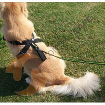Peitoral Para Cachorros Segurança Veiculo +guia(m)