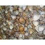 5 Kg De Conchas Do Mar (pacotão)