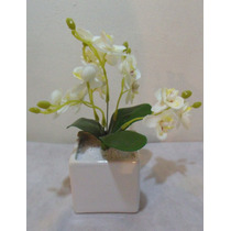 Arranjo De Mini Orquídea Branca Vaso Quadrado Branco