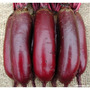 160 Sementes Da Beterraba Comprida Vermelha Frete Gratuito