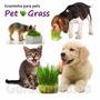 Sementes Orgânicas Pet Grass Grama P/ Cães Gatos Graminha