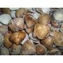 2 Kg De Conchas Do Mar (pacotão) Somente 29,99