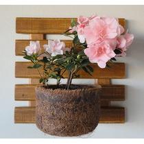 Painel Jardim Vertical Com Um Vaso De Fibra De Coco