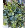 Kit 10 Buquês Folha Galho Verde Eucalipto Arranjo 50 Cm