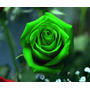 50 Sementes De Rosas Verde Raras Exóticas Pra Fazer Mudas