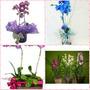 Grande Promoção De Orquídeas Diversas Cores E Espécies