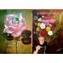 Dvd Aula De Pintura De Rosas