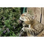 1000 Sementes De Erva Dos Gatos Catnip #iwvc