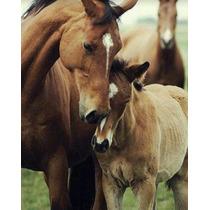 Aceito Doações De Cavalos, Eguas, Potros