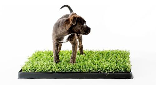 700 Sementes Para Pet Grass Grama Gatos Cães Coelhos!