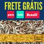 250 Tenébrios Molitor - Frete Grátis Br