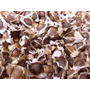250 Sementes De Moringa Oleifera (frete Grátis)