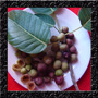 Figo - Ficus Luschnathiana - 200 Sementes Fruta Para Mudas