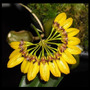 Mini Orquídea, Rara Bulbophyllum, Linda, Delicada, Exótica