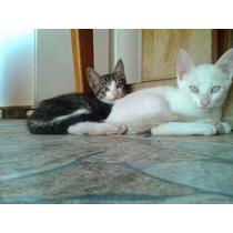Doa-se Filhotes De Gatos (2 Meses) Sp Lindos