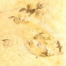 Carte Cabinet -criança Morta - Phot. Castro (manaus-am)