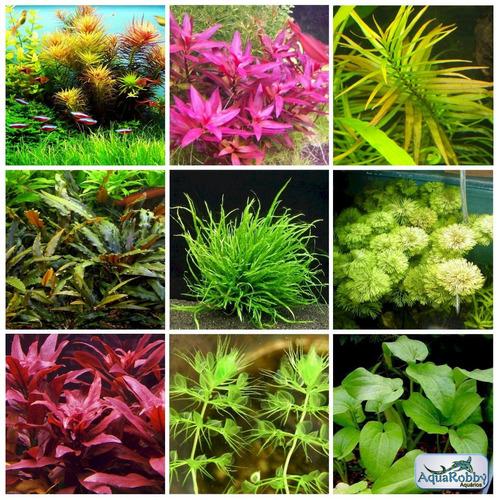 (30) Sementes Planta Para Aquário Low Tech