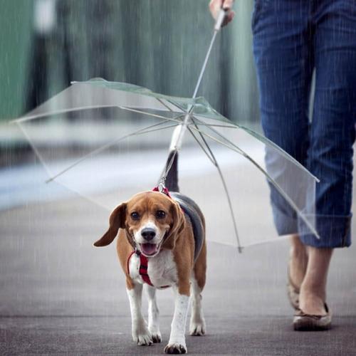 Guarda Chuva Pet Para Cachorro Cães Capa De Chuva Fazzoletti