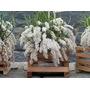 Pacote Com 10 Micro Orquídeas Diferentes