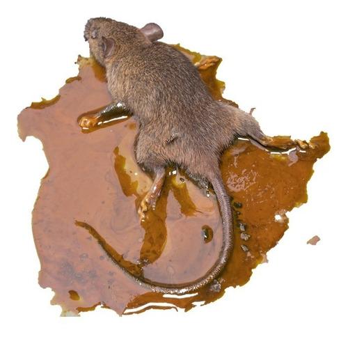 Cartela Cola Ratos 24un. Não É Raticida Não É Veneno