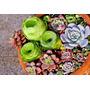 24 Sementes De Suculentas-raras+kit Germinação