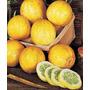Sementes Pepino Limão Importadas Rarissima Legume P/ Mudas
