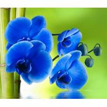 Sementes De Orquídea Azul - 10 Sementes