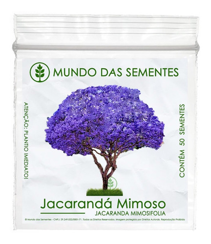 50 Sementes Jacarandá Mimoso Mimosifolia Azul Árvore