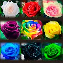 45 Sementes De Rosas Mto Raras Preta Arco-íris Verde 9 Cores