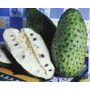 Muda De Graviola Fruta Medicinal/comercial/ogânica